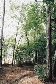Bosco nel Parco del Roccolo