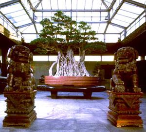 Museo dei Bonsai